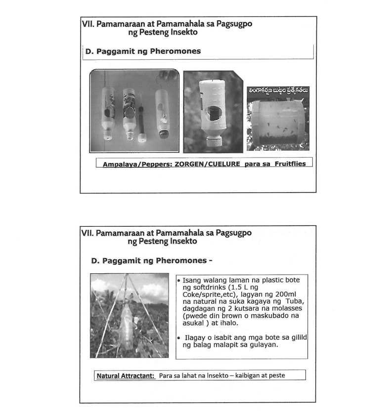 Pagkilala, Pamamahala at Pagsugpo sa mga Mahahalagang Pesteng Insekto ng Gulayjpg_Page6_Image1