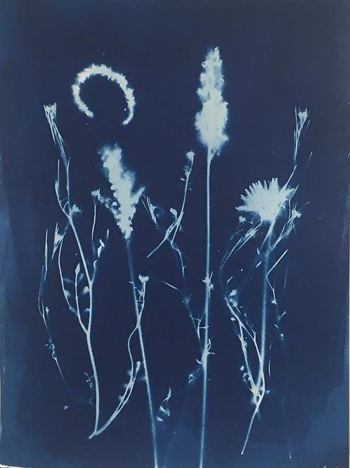 Artist: Emie Hughes, Title: Summer Blooms