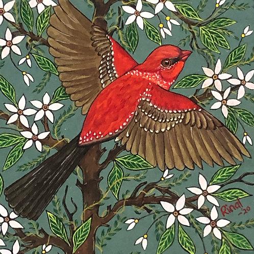 Artist: Rinal Parikh, Title: Strawberry Finch