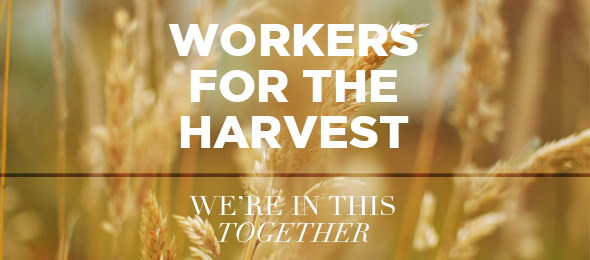 Follow-up Workers For The Harvest