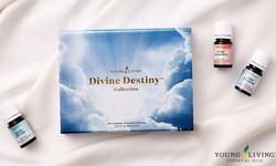 Devine Destiny Collection