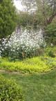 Massif du cornouillier et du Cerisier à écorce