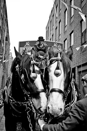 Fullers Brewery Dray & Horses - East End London