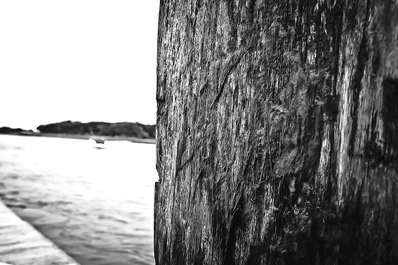 Nautical nature - Selsey/Pagham Harbour (4)