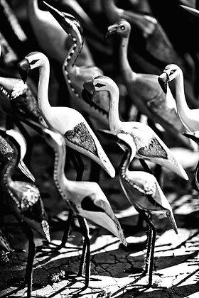 African wild birds  - Nairobi Kenya