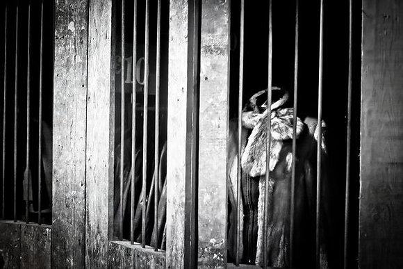 Fur behind bars - Camden Stables Market