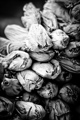 Bushels of fresh corn - San Pedro Mkt Cuso Peru
