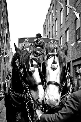 Vintage Brewery Dray & Horses - EastEnd London