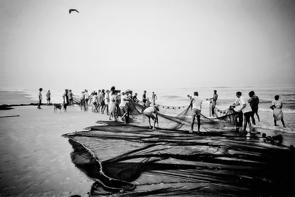 Bringing in the early morning catch - Goa India