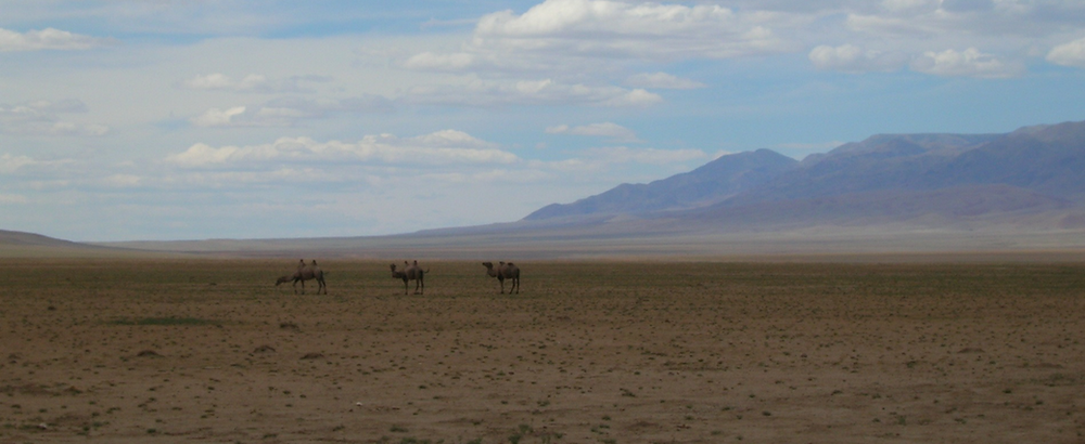 Camels spotted as I crossed the Bogd Ranges on my way to Nemegt Nuruu in 2005