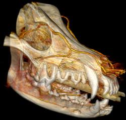 Skull 3D PC.jpg