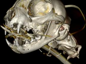 New Veterinary Dentistry On-Demand WEBINAR Series