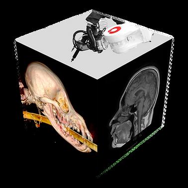 EINT_Voxel_Robot-Animal-Human-Skull_V1-3