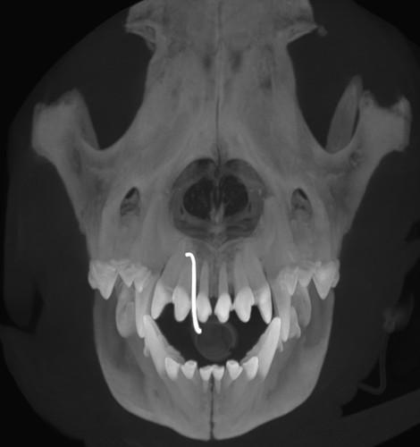 Image_Dental_MI_1.jpg