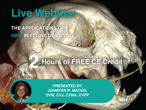 [Live] The Applications of HDVI in Feline Dentistry