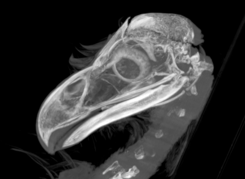 b Eagle Skull Fx Sag Slab.jpg