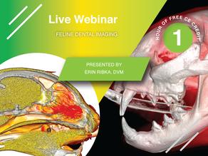[Live] Peregrine Webinar: Feline Dental Imaging with Dr. Erin Ribka