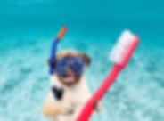Copy of Dog_Pug_Snorkling-Scuba-Toothbru