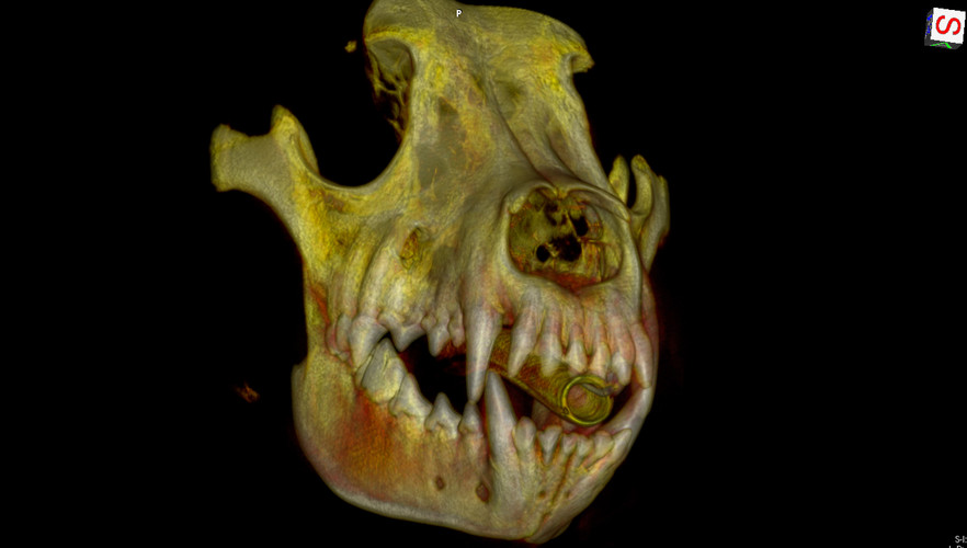 Image_Dental_3D_2.jpg