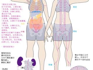 #首を前後に動かしにくい 症状の改善に #膀胱経 の #崑崙 という #ツボ が有効な場合も