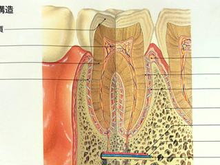 #歯周病菌 の悪影響で比較的若い年齢から #アルツハイマー 型 #認知症 を引き起こすので効果のある治療を