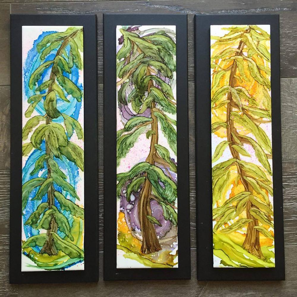 A set of three evergreens that I donated to Nick and Rayzanna's social. They were won by Klose Chen!