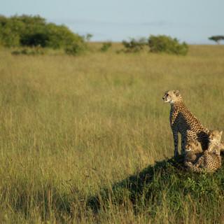 Fotografie přírody - safari v Masai Mara, Keňa