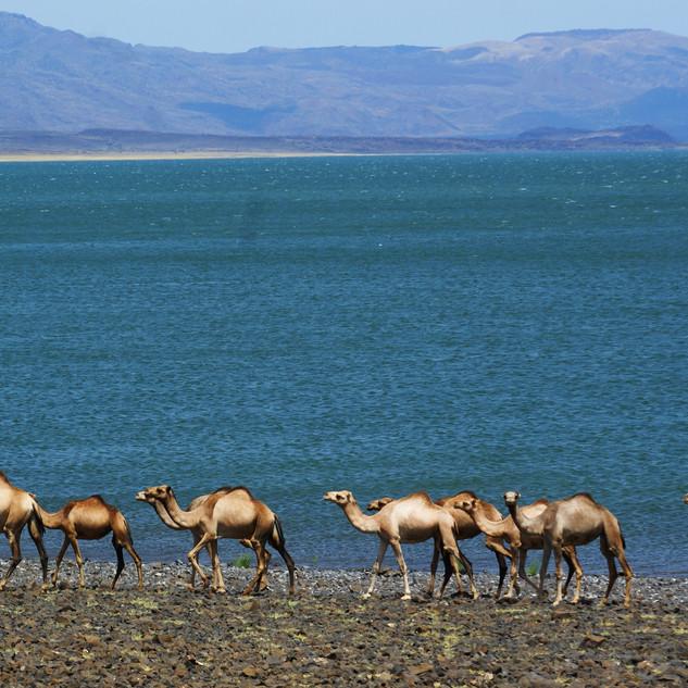 Reportážní fotografie, fotografie krajiny - jezero Turkana, Keňa