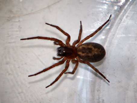 Quick ways to keep Spiders at Bay!