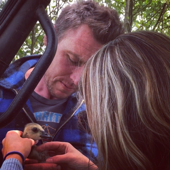What luck!! 🐥 Taking our favourite Veterinarian on a tour of the farm this afternoon, we stumbled upon an injured gosling. Bit of a kinked neck but hopefully the little one will be just fine!! 💪🏻 #farmlife #airbnbexperience #langfordcourtsouth