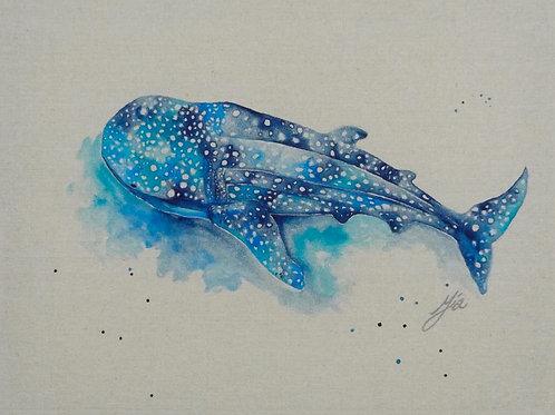Whale Shark Dreaming