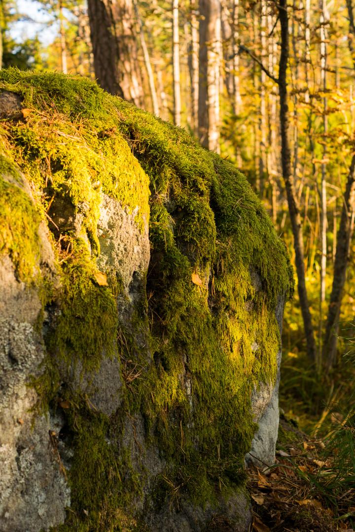 Metsän uumenissa 18.10.2015