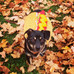 Keeping Your Pets Safe on Halloween