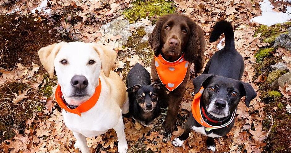 dog park web 1.jpg