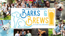 Partnering with Dakin Humane Society - Barks and Brews