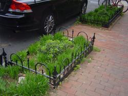 Specialty tree fence