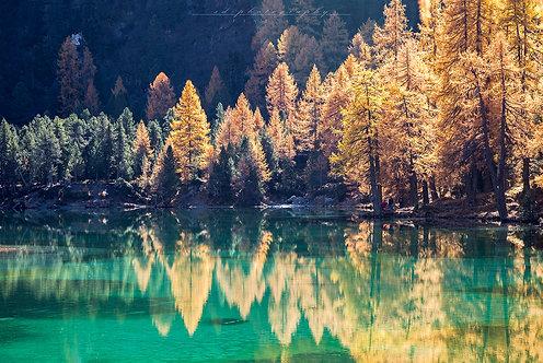 Lärchen am Bergsee