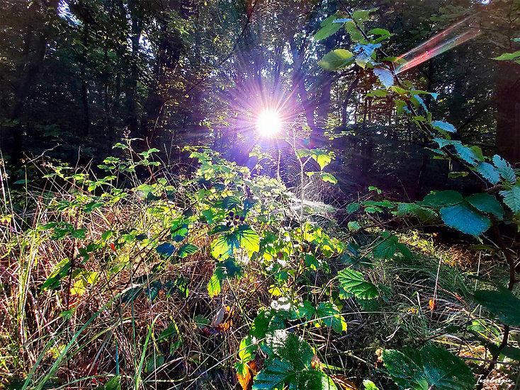 Nr.124 Morgenstimmung im Wald von Prora , in Nähe des Baumwipfelpfades