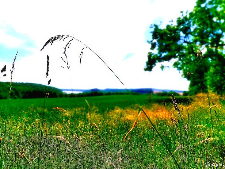 Nr.96 Blick auf die Landschaft am kleinen Jasmunder Bodden