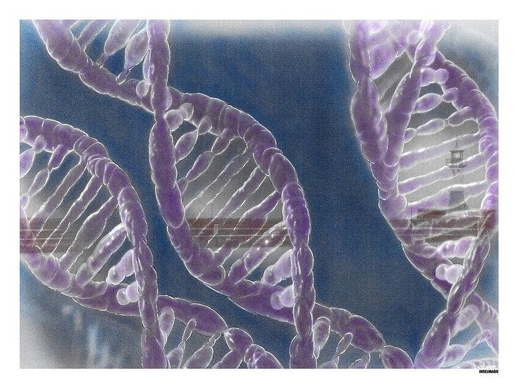 Nr.6 Ostsee-DNA