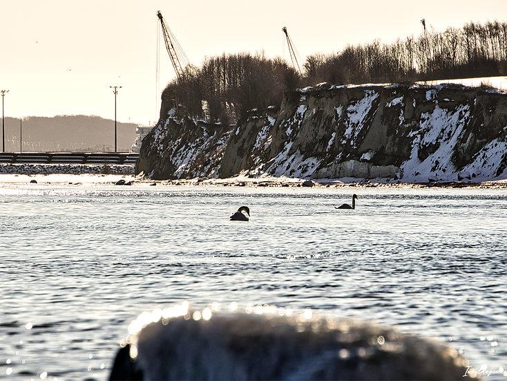Nr.259 Blick von Sassnitz auf den Fährhafen Mukran im Winter