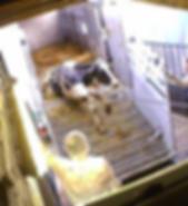 vlcsnap-2018-10-05-21h04m14s663_edited.p