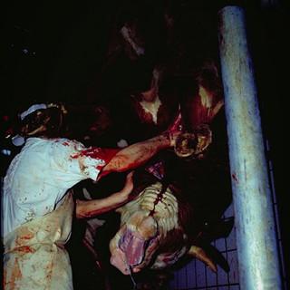 Das Brüllen der Rinder