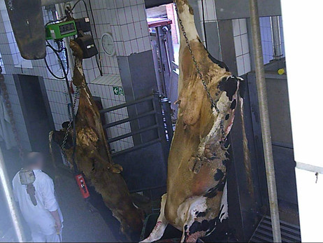 SOKO Tierschutz Pressemitteilung