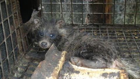 born in the fur farm (poalnd)