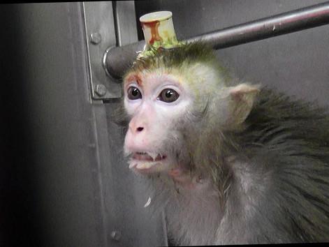 Der Affenfolter Lobbyist im Zwielicht