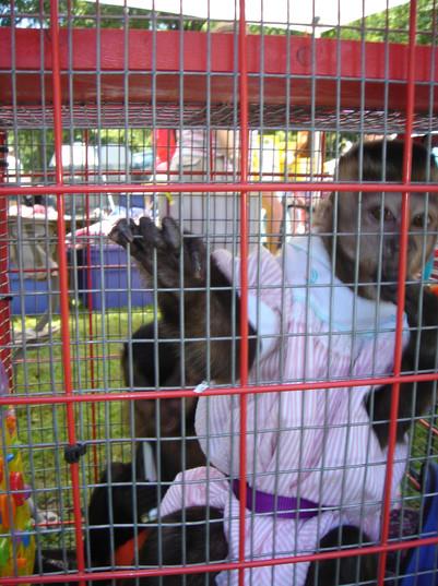 cruel pet monkey trade USA