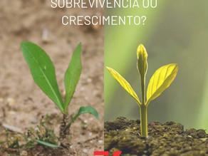Sobrevivência ou crescimento?