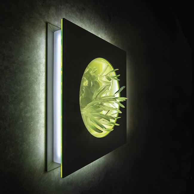 Alien Flower | Studio Alisa Sheinson