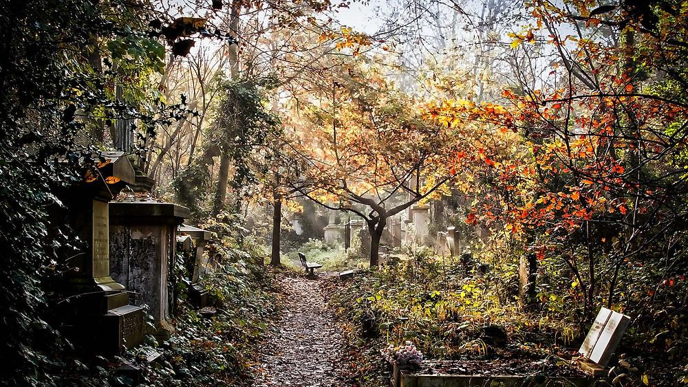 Abney park cemetery graveyard in autumn an stunning overgrown pathway